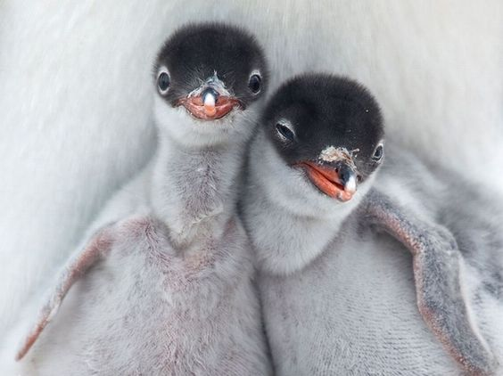 antarctica-the-best-animals-trip