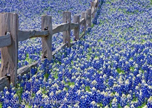awesome-things-you-can-do-within-austin-texas-throughout-springtime
