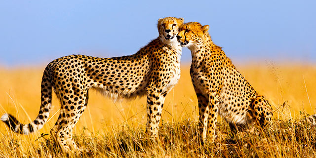 exactly-where-would-be-the-greatest-kenya-loved-ones-safaris