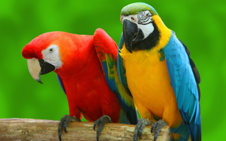 Crazy Parrots -- Tend to be These people Truly Crazy