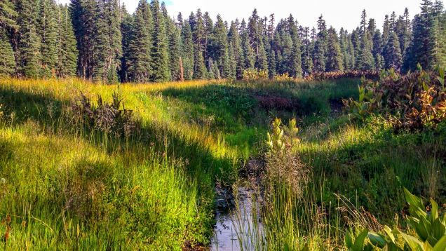 Rick Corbett Nationwide Recreation area -- Probably the most Substantial Organic Habitats On the planet