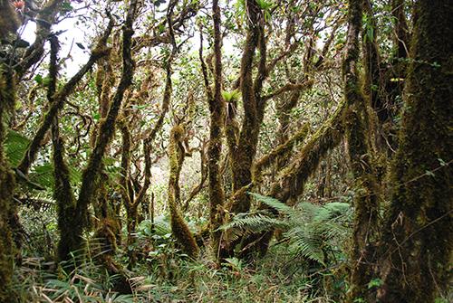 finding-el-yunque-rainfall-woodland
